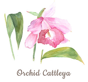 Badezimmerpflanzen: Orchidee - Cattleya