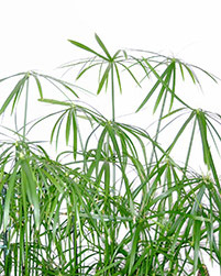 Badezimmerpflanzen: Schöne Pflanzen fürs Badezimmer | Der Badberater